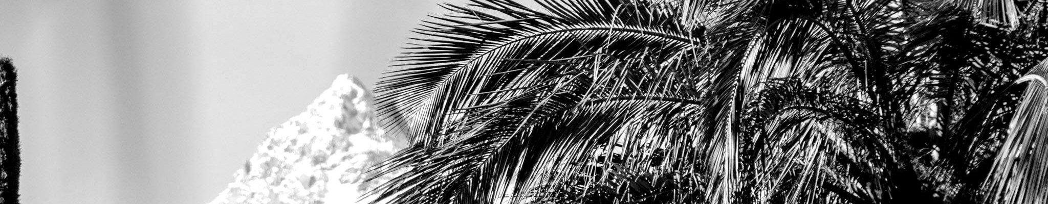 Palmenflair